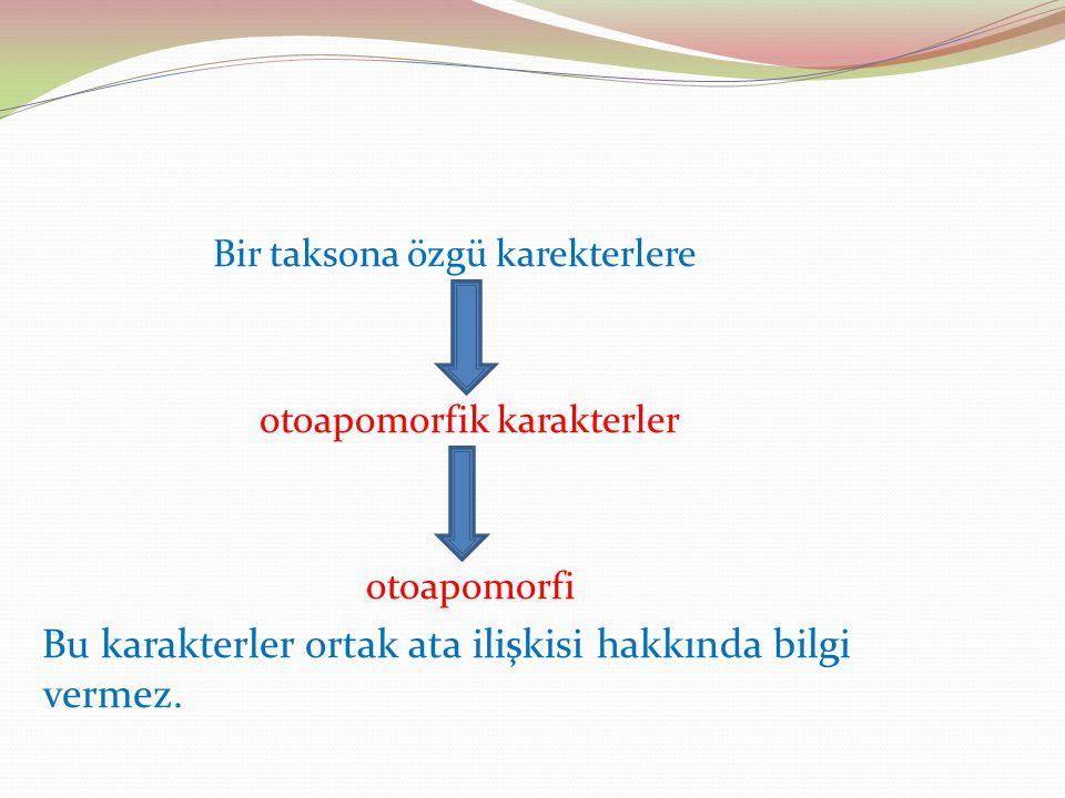Bir taksona özgü karekterlere otoapomorfik karakterler otoapomorfi Bu karakterler ortak ata ilişkisi hakkında bilgi vermez.