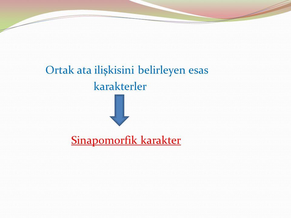 Ortak ata ilişkisini belirleyen esas karakterler Sinapomorfik karakter