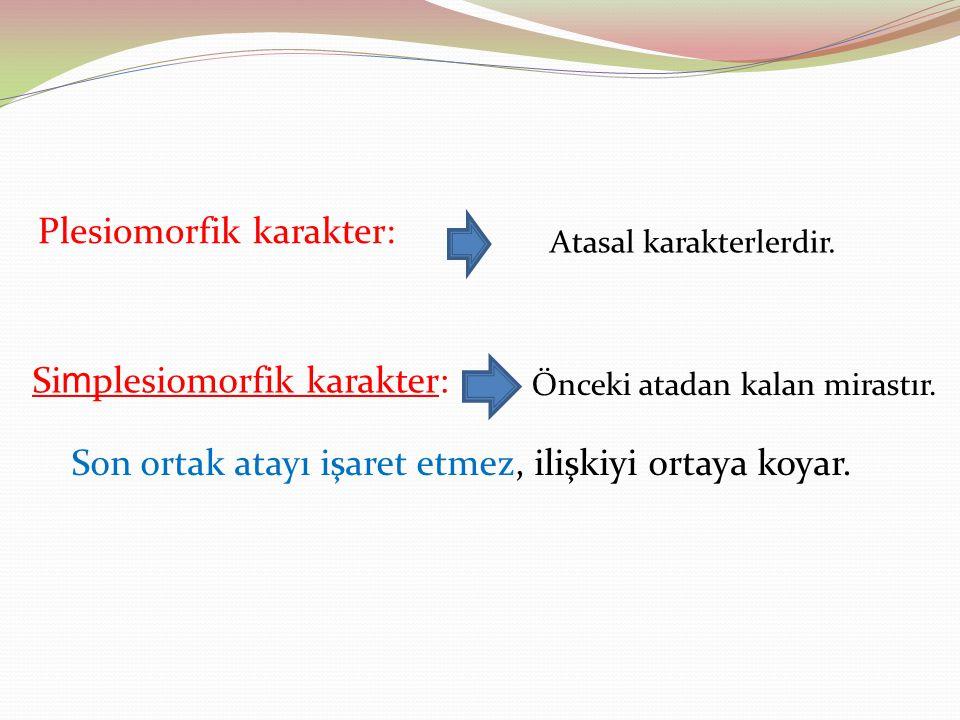 Plesiomorfik karakter: Atasal karakterlerdir. Si m plesiomorfik karakter: Önceki atadan kalan mirastır. Son ortak atayı işaret etmez, ilişkiyi ortaya