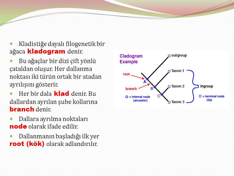 Kladistiğe dayalı filogenetik bir ağaca kladogram denir. Bu ağaçlar bir dizi çift yönlü çataldan oluşur. Her dallanma noktası iki türün ortak bir atad