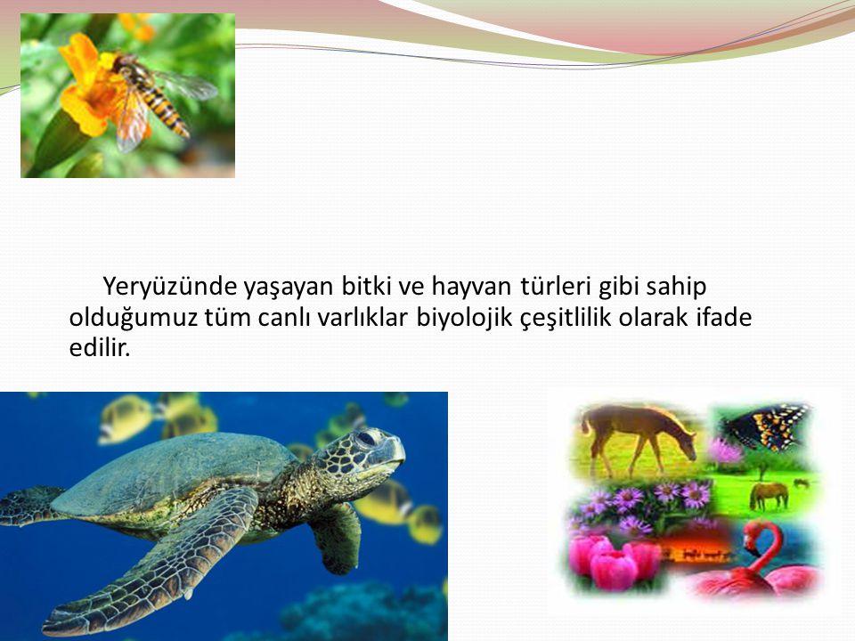 Yeryüzünde yaşayan bitki ve hayvan türleri gibi sahip olduğumuz tüm canlı varlıklar biyolojik çeşitlilik olarak ifade edilir.