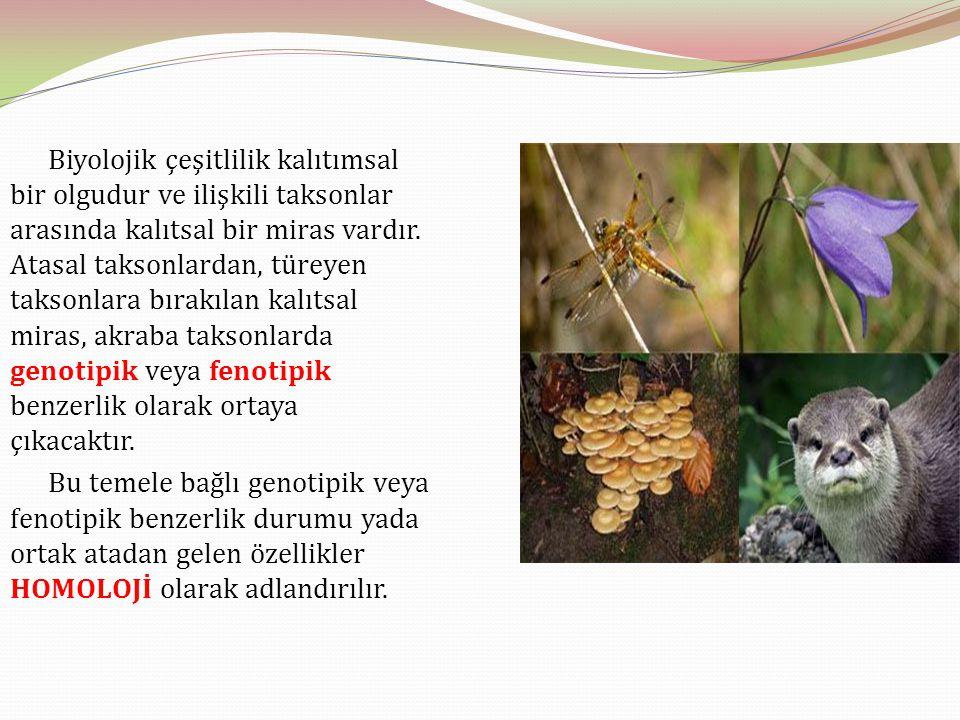 Biyolojik çeşitlilik kalıtımsal bir olgudur ve ilişkili taksonlar arasında kalıtsal bir miras vardır. Atasal taksonlardan, türeyen taksonlara bırakıla