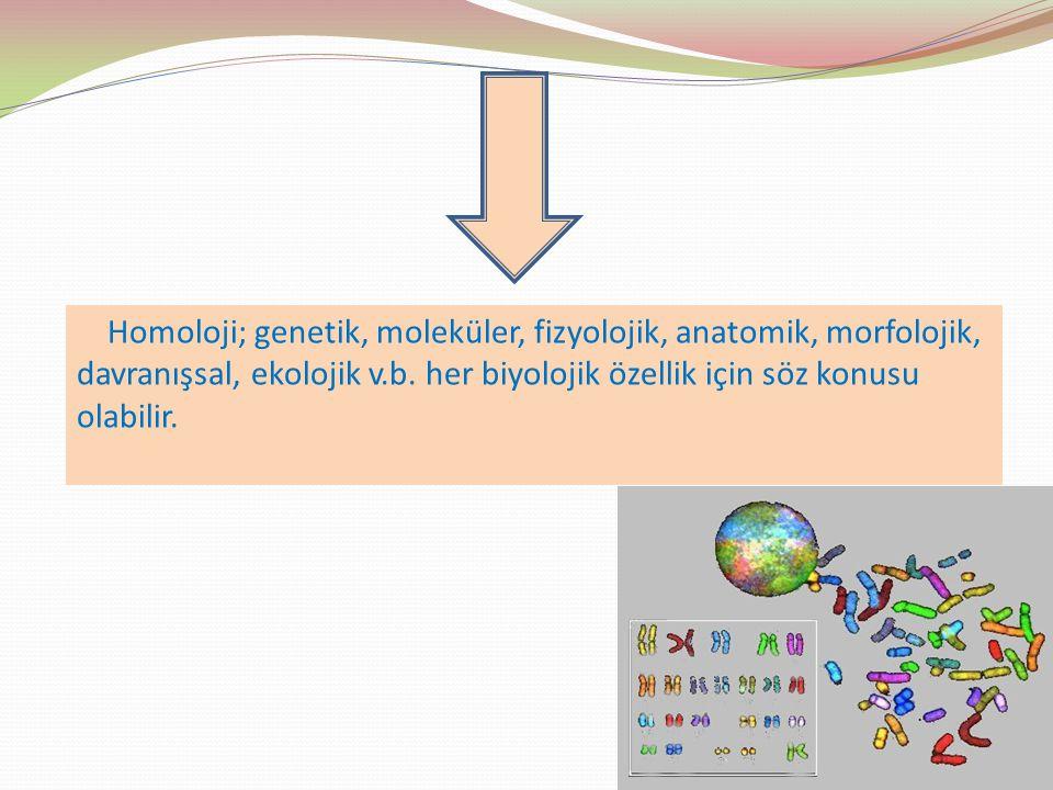 Anatomik homoloji; Beş parmaklı üye Tetrapodlar için homolog bir karakterdir.