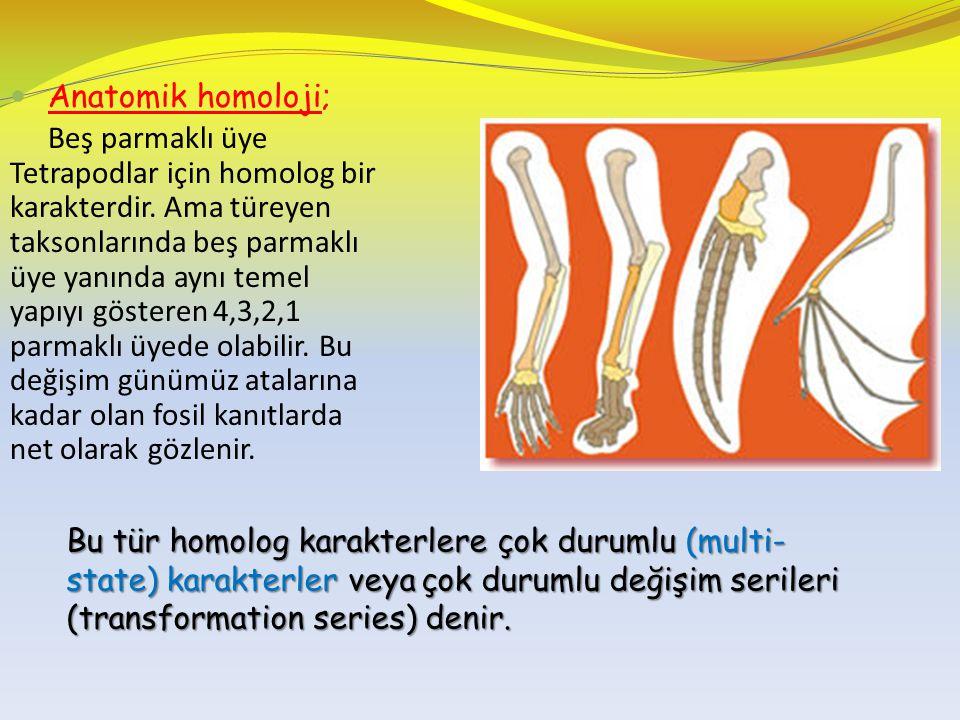 Anatomik homoloji; Beş parmaklı üye Tetrapodlar için homolog bir karakterdir. Ama türeyen taksonlarında beş parmaklı üye yanında aynı temel yapıyı gös