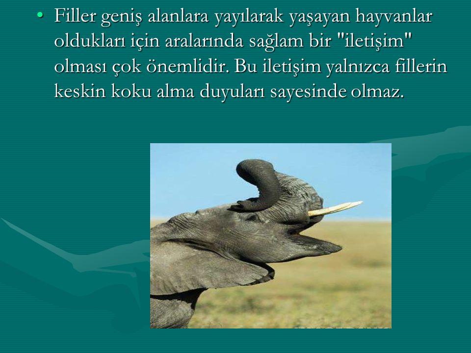 Filler geniş alanlara yayılarak yaşayan hayvanlar oldukları için aralarında sağlam bir
