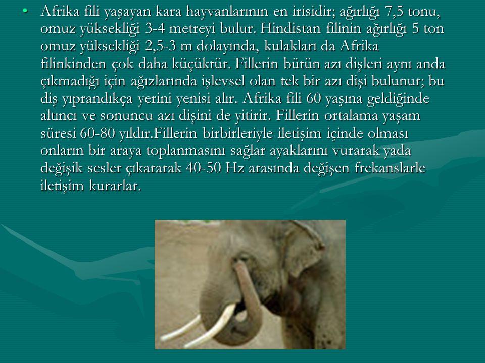 Afrika fili yaşayan kara hayvanlarının en irisidir; ağırlığı 7,5 tonu, omuz yüksekliği 3-4 metreyi bulur. Hindistan filinin ağırlığı 5 ton omuz yüksek