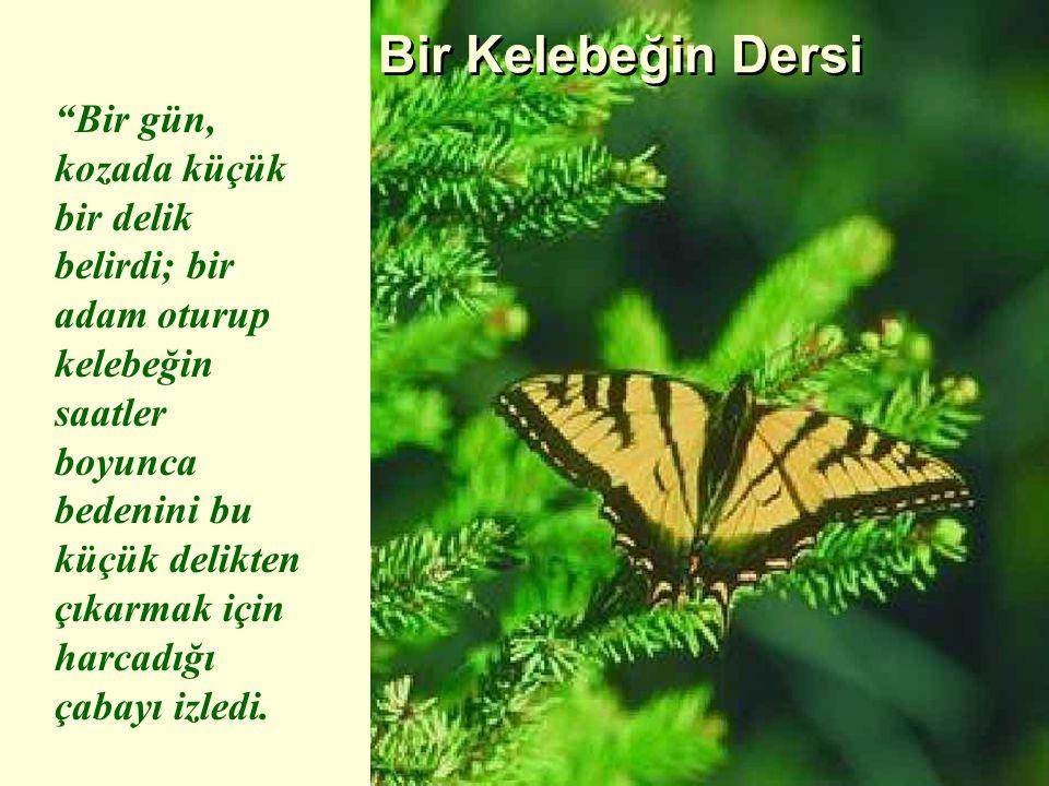 """Bir Kelebeğin Dersi """"Bir gün, kozada küçük bir delik belirdi; bir adam oturup kelebeğin saatler boyunca bedenini bu küçük delikten çıkarmak için harca"""