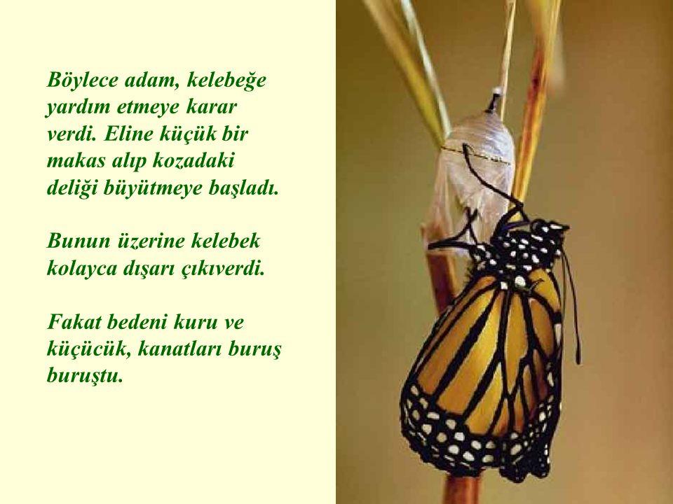 Böylece adam, kelebeğe yardım etmeye karar verdi. Eline küçük bir makas alıp kozadaki deliği büyütmeye başladı. Bunun üzerine kelebek kolayca dışarı ç