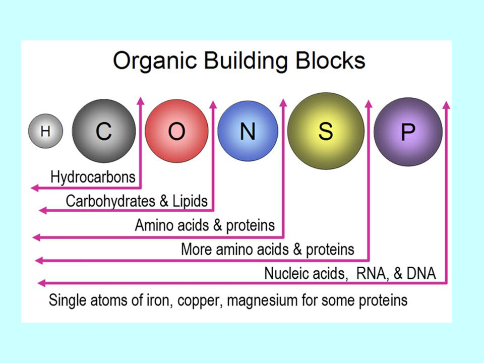 carbohydrate and lipids In carbohydrate counting, carbohydrates are first calculated as a percentage of total calories and then in calories and grams about one-half  several positions on a monosaccharide can be linked to biomolecules such as other saccharides, proteins, or lipids through.