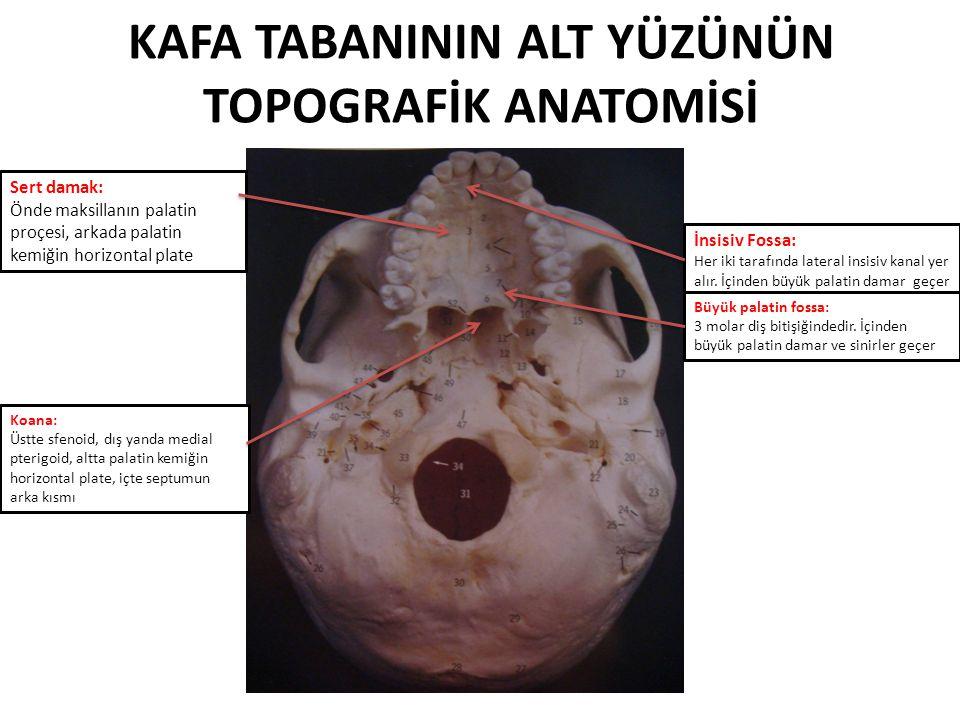KAFA TABANI ANATOMİSİ Dr. Ali Rıza Gökduman DOÇ. DR. ÖZGÜR YİĞİT ...