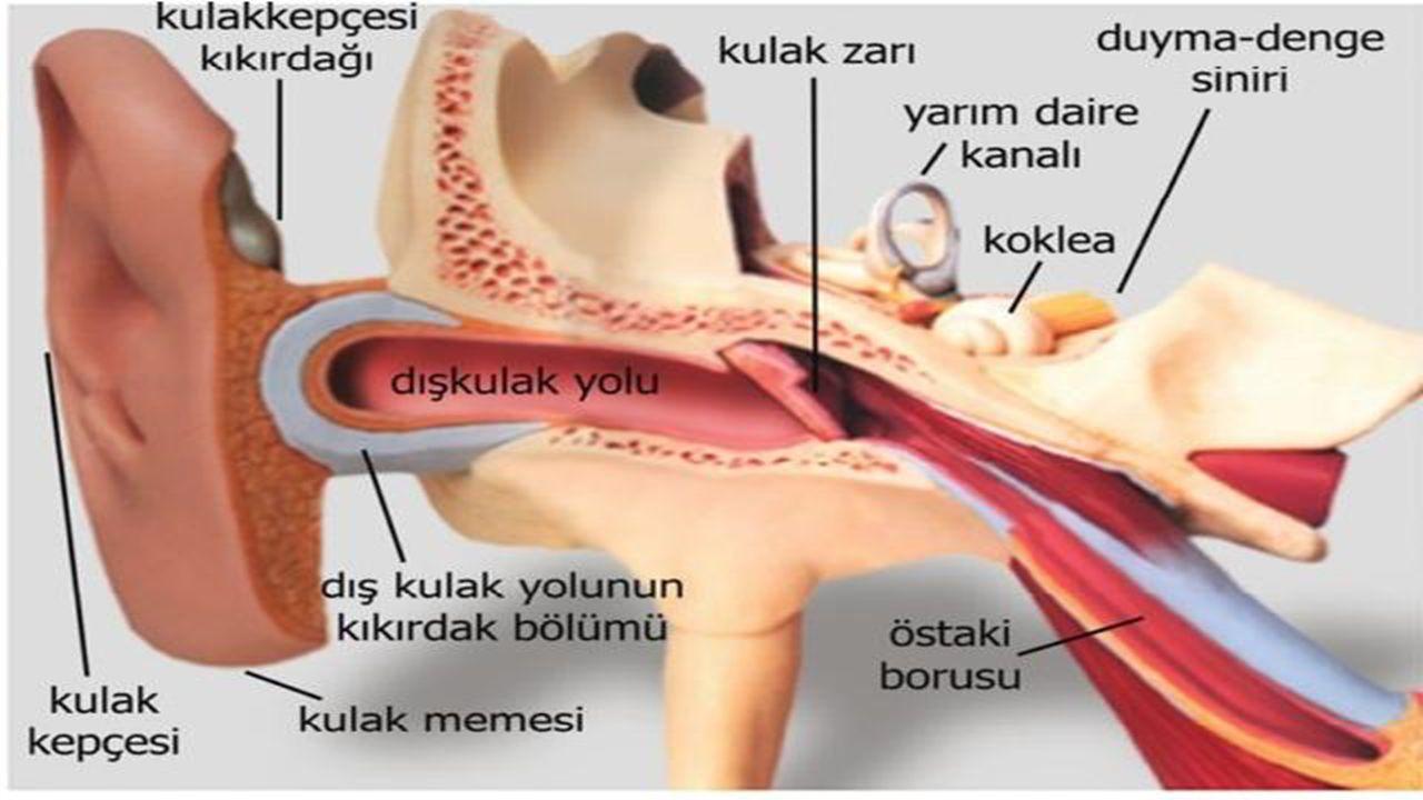 Orta kulak iltihabı tanısı nasıl konur