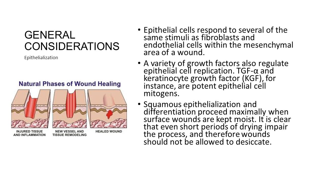 how tissue forms a wound Clinicians observe how granulation tissue is forming on a wound in order to assess how well the injury is being repaired by the body granulation tissue forming over a wound means that the body is healthy and working to form a new layer of skin over the part that was torn during injury.