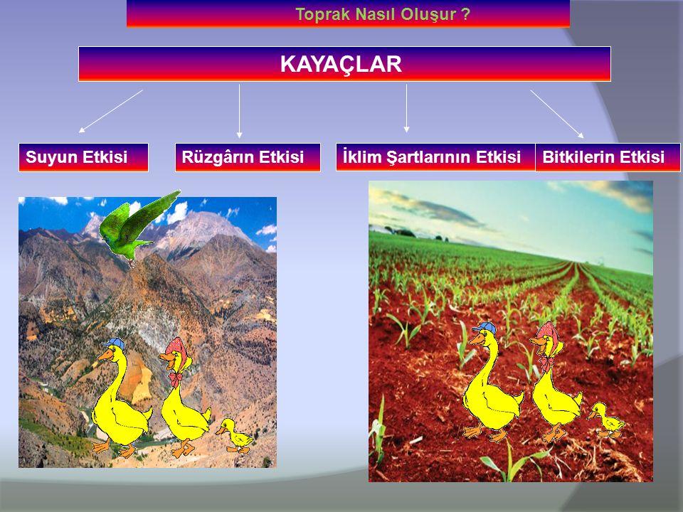 Toprak nasıl oluştu Toprak oluşumu: koşullar, faktörler ve süreç