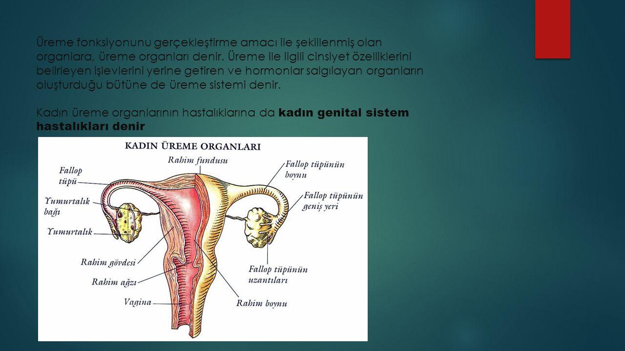 Kadınlarda Yaşanan Genital Tümör Sorunu