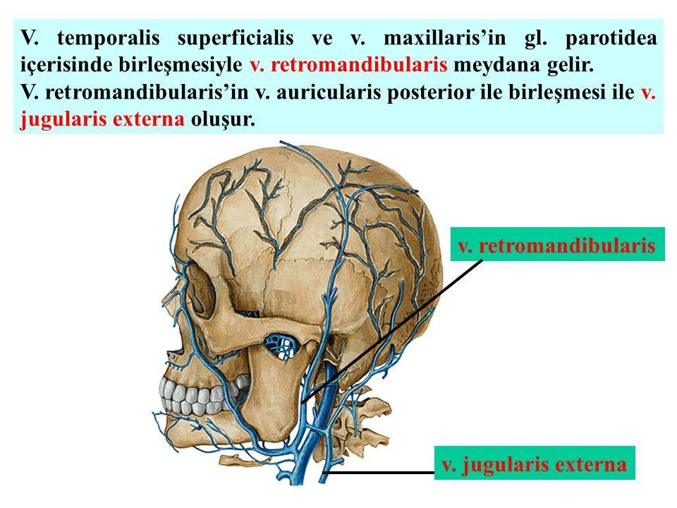Toplardamarlar (Venae) Kalbe kan getiren damarlara venae denir. Venler  arterlerin aksine kalbe yaklaştıkça kalınlaşırlar. Duvarları arterlere  nazaran daha. - ppt indir