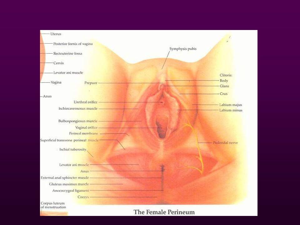 Classification of perineal tear