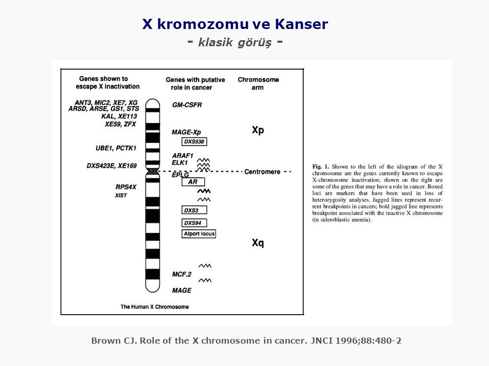 Brown CJ. Role of the X chromosome in cancer.